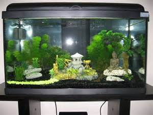 dekoration aquarium aquarium avec d 233 coration asiatique d 233 coration zen
