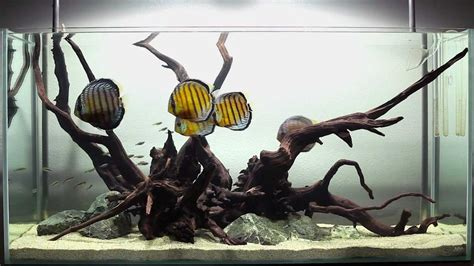 aquarium design group discus a hardscape for discus youtube