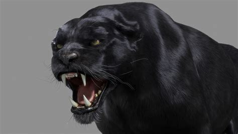 what color is a panther panther black a stil cz