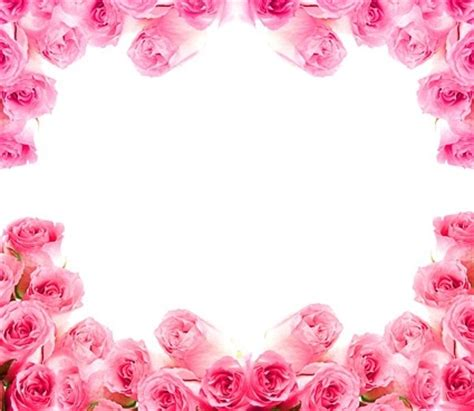 complementary of pink pink rose flowers images free stock photos download