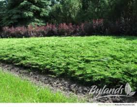 Modern Trim Calgary Carpet 174 Juniper Juniperus Sabina Monna