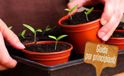 piante da orto in vaso orto in vaso come iniziare tutti i consigli per