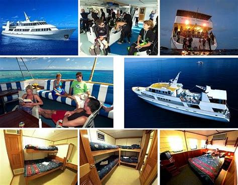 pro dive cairns pro dive cairns australia reviews pictures