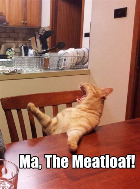 Cat Sitting At Table Meme - i am hungry