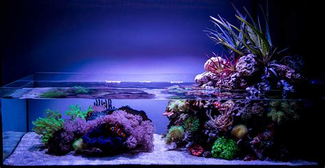 Best Low Light Aquarium Plants wawawang 2015 featured reef aquariums nano reef com