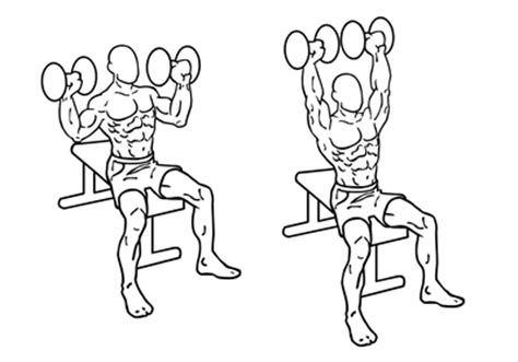 seated shoulder dumbbell press seated dumbbell shoulder press krachttraining info