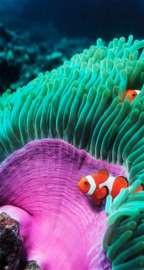 anemone finding nemo 25 best ideas about coral on pinterest coral reefs