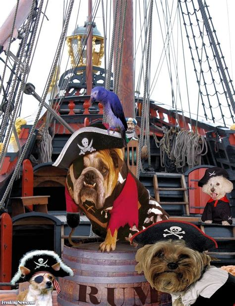 how to ship a puppy pirate dogs on their ship pictures