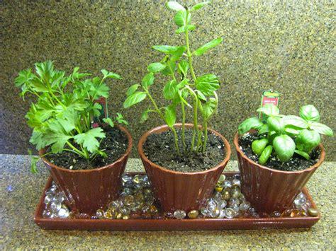 indoor herb garden  started    white planter