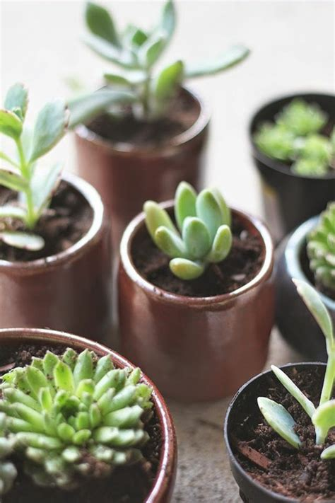 Gartenpflanzen Pflegeleicht by Sukkulenten Pflege Wie Pflegeleicht Sind Sukkulenten