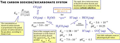 Thermal Decomposition Of Sodium Hydrogen Carbonate Essay by Thermal Decomposition Of Sodium Hydrogen Carbonate Essay Help Essay Ielts Topics