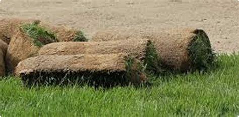 vendita tappeti erbosi vendita tappeti erbosi a rotoli