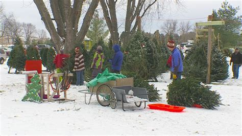 4 things to do krueger s christmas tree farm shrine