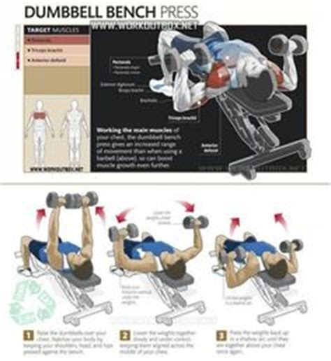 best bench press program for strength dumbbell bench press my all around favorite chest