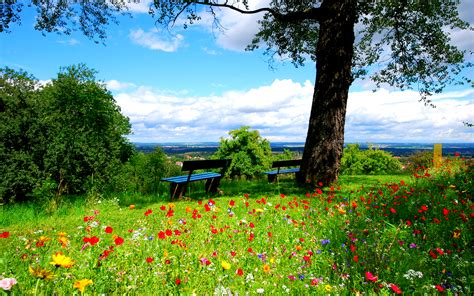 wallpaper flowers landscape bench tree green hd