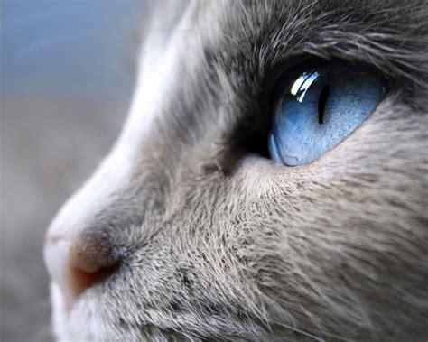 cat eye mandalyzing cat eye