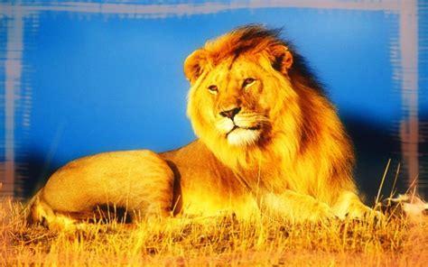 imagenes animales salvajes africa disfruta de im 225 genes de animales salvajes 193 frica y australia