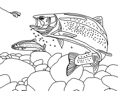 trout fish coloring pages coloring page world rainbow trout free coloring pages
