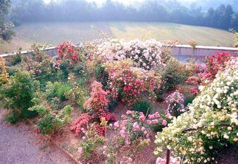 fiori estivi da giardino fiori estivi bulbi bulbi di fiori estivi