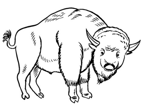 printable bison coloring pages  kids
