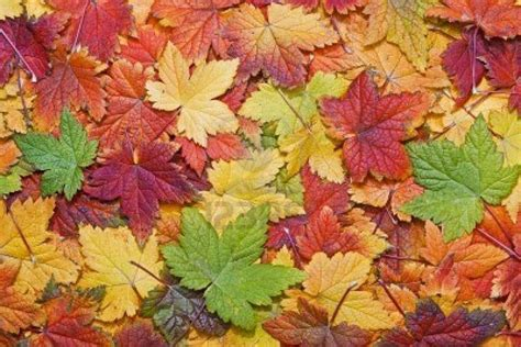 google images fall leaves autumn leaves google search leaf patterns pinterest