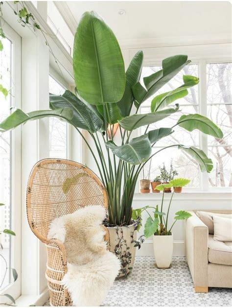 common house plants large top 5 indoor plants of 2016 plantas jardiner 237 a y plantas interior