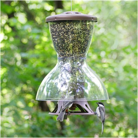 bird feeders shop at hayneedle com