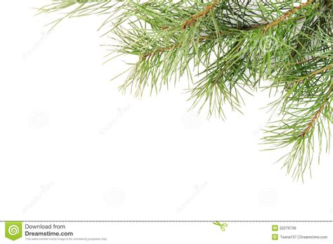 christmas tree branches stock photo image of studio