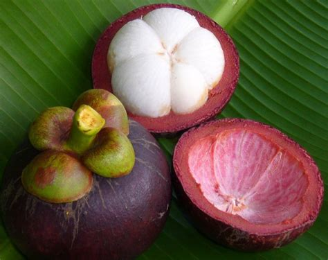 1 fruit in the world top 12 most fruits in the world listovative