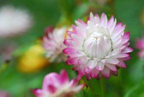 tipi di fiori bianchi tipi di fiori bianchi rosa deitranet