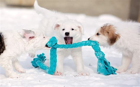 hd puppies puppy baby dog dogs high resolution wallpaper
