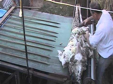 sheep shearing table plans automatic loading shearing table alst