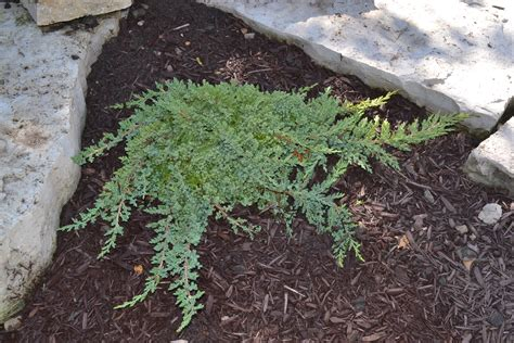 top 28 low lying ground cover types of low lying perennials for ground cover fall garden