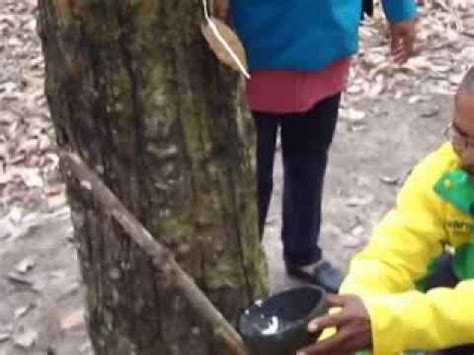 Jual Bioboost Di Padang Pariaman Pupuk Organik Cair karet pasir p doovi