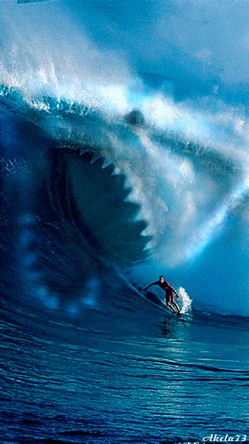 shark wave pictures   images  facebook tumblr pinterest  twitter