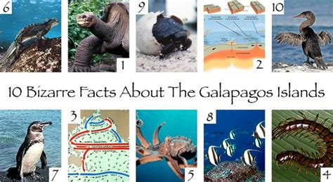 7 Amazing Animals From The Galapagos Islands by 17 Best Images About Galapagos Unbound On The