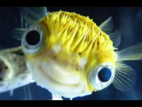 fish for life a adorable pet fish can be so friendly and playful best of pet fish videos vines compilations