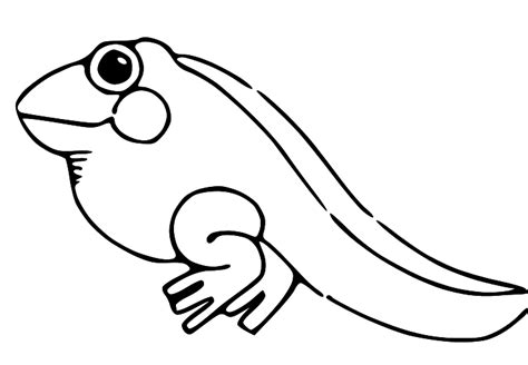 frog eggs coloring page tadpole clipart froggy pencil and in color tadpole