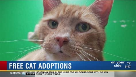 animal house st pete cat adoptions are free in april at a st pete animal shelter wfla com