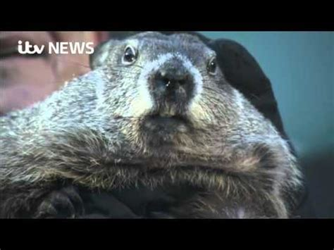 groundhog day morning tuesday morning news groundhog day clown laverne