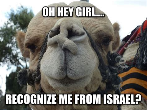 Camel Meme - funny camel www pixshark com images galleries with a bite