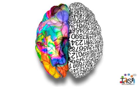 neurociencia 191 con qu 233 parte del cerebro respondes a la
