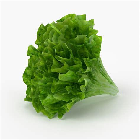 vegetables 3d max realistic lettuce real vegetables 3d model