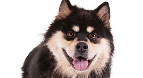 abc puppy paw province abc breeds