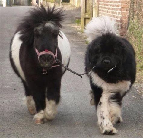dogs that look like horses dogs 10 dogs that look like bears healthy paws
