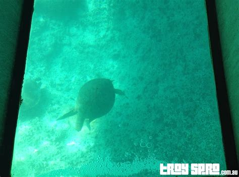 glass bottom boat movie youtube a day at lady musgrave island troy spro