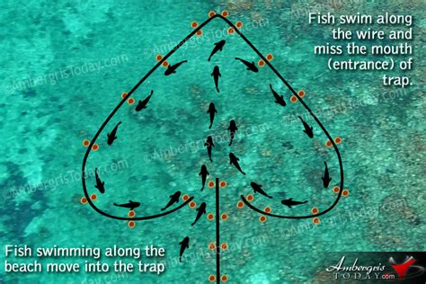 lobster trap diagram dying arts of fishermen shaped fish wire traps 2
