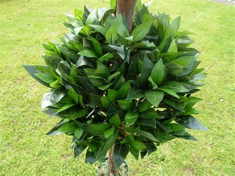 piante da arredo piante finte da arredo piante finte arredare con