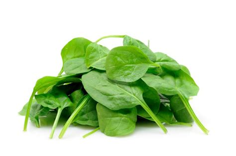 is spinach for dogs can dogs eat spinach the amazing benefits of spinach to your pets