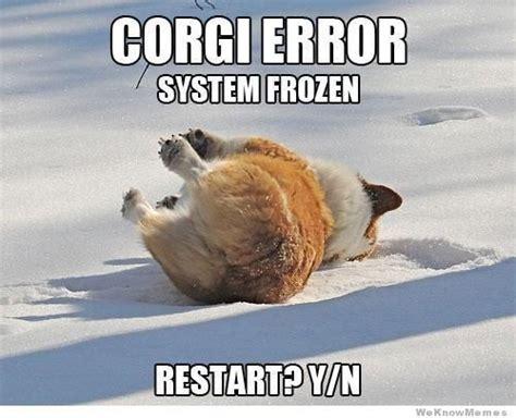 Funny Corgi Memes - 12 best corgi memes of all time